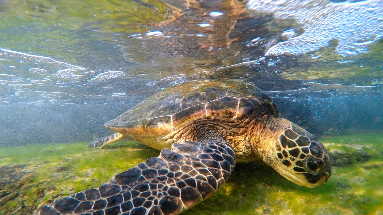 Hawaii Turtles | A Moment in Time