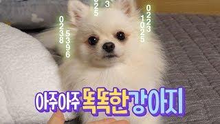 아주아주 똑똑한 강아지 thumbnail