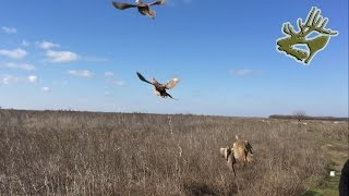 Супер охота на фазана / лучшие выстрелы