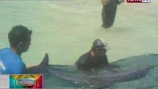 BP: Sugatang dolphin sa Boracay Island, Malay, Aklan, nailigtas