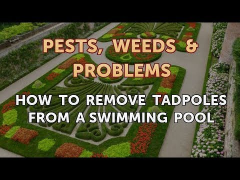 How To Remove Tadpoles From A Swimming Pool