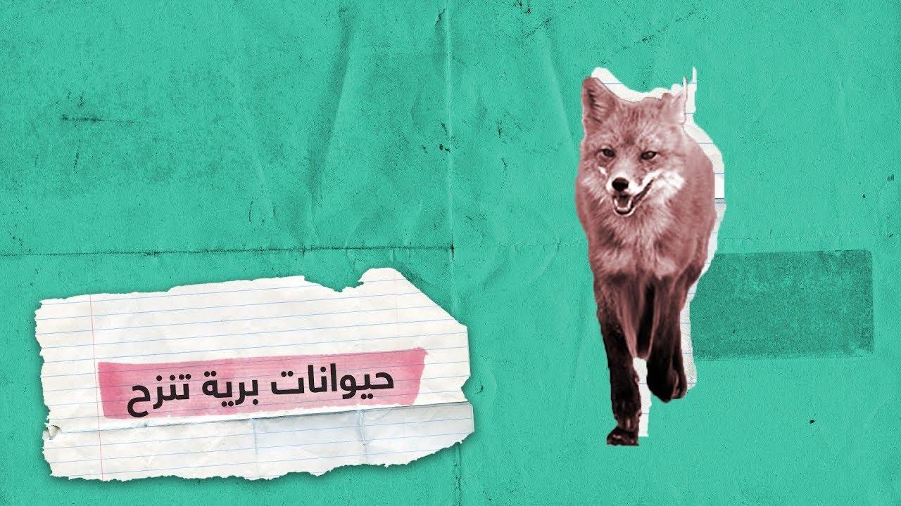 حيوانات برية تهرب من ألسنة اللهب في سيبيريا| RT Play