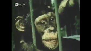 Метод проб и ошибок, инсайт - Do Animals Think - trial and error , insight