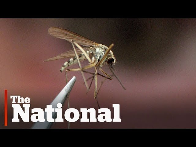 West Nile virus outbreak expected in Ontario, researchers say