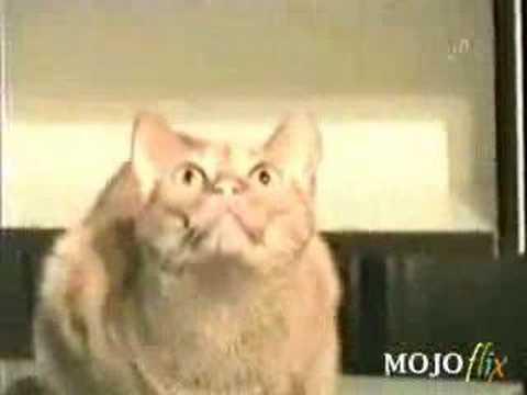 кошкины приколы! смотреть онлайн бесплатно — хорошее