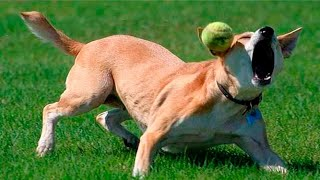 TRY NOT TO LAUGH - Funny Animal Fails 2021