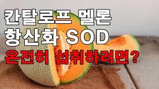 칸탈로프 멜론 항상화 SOD를 온전히 섭취하려면?