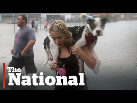 Texas Pets In Peril After Heavy Flooding Caused By Harvey