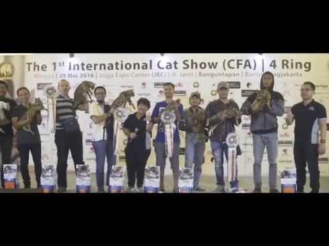 THE CHAMP - CFA CAT SHOW - Yogyakarta