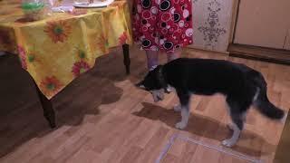 Собака - ПЕРЕЖИВАКА