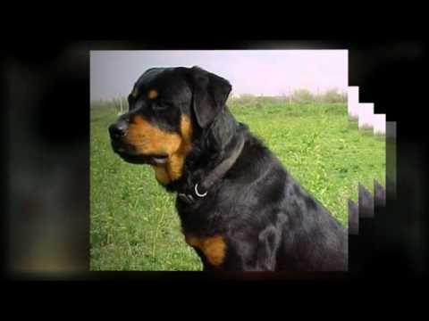Private Dog Training Lessons La Jolla CA Dog Trainers