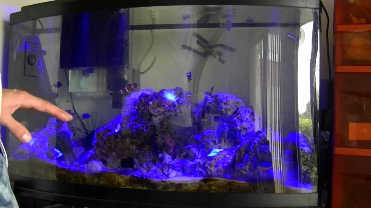Freshwater fish acclimation - How To Acclimate Corals Inverts Fish Etc