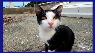 漁港にいたハチワレ猫をナデナデするとゴロゴロと懐いてきてカワイイ