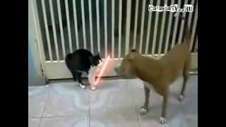 Кот со свветовыми мечами !Fox
