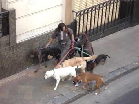 Dog Walker Of Buenos Aires Argentina