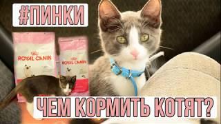 Чем кормить котят, кошек / кошачий корм / ROYAL CANIN / GIM CATS