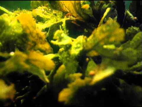 Растения окружающий мир, эволюция, классификация