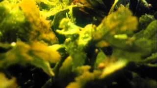 разнообразие растений водоросли