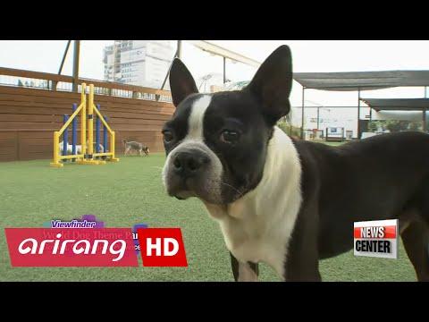 Viewfinder _ World Dog Theme Park