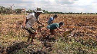 Người Sài Gòn bắt chuột đồng cực vui nhộn chẳng khác gì ở Miền Tây