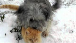 Любовь собаки и кота.wmv