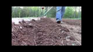 Planting Bush Beans