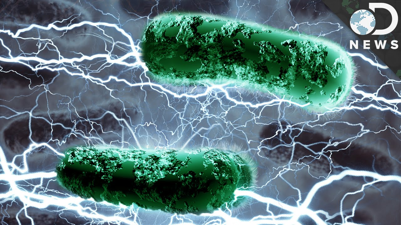 Bacteria Live Electricity