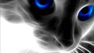 The magical power of cats