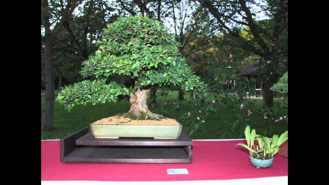Bonsai Club Eda Uchi Kai @ Japanse tuin Hasselt 2 juni 2012   YouTube
