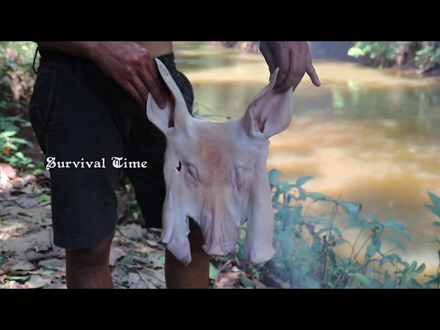 Primitive Technology: Cooking Pig in the Forest - Top Cooking Pig Eating Delicious