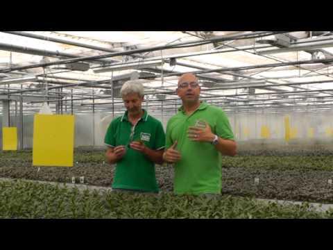 1-Tages-Reise in die Welt der Wasserpflanzen