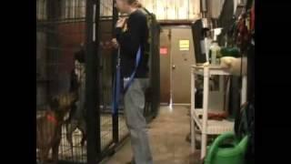 Animal Rescue New Orleans / Melissa Animal Behaviorist