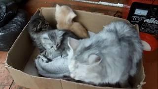 Котята ищут новых хозяев// Семья Фетистовых