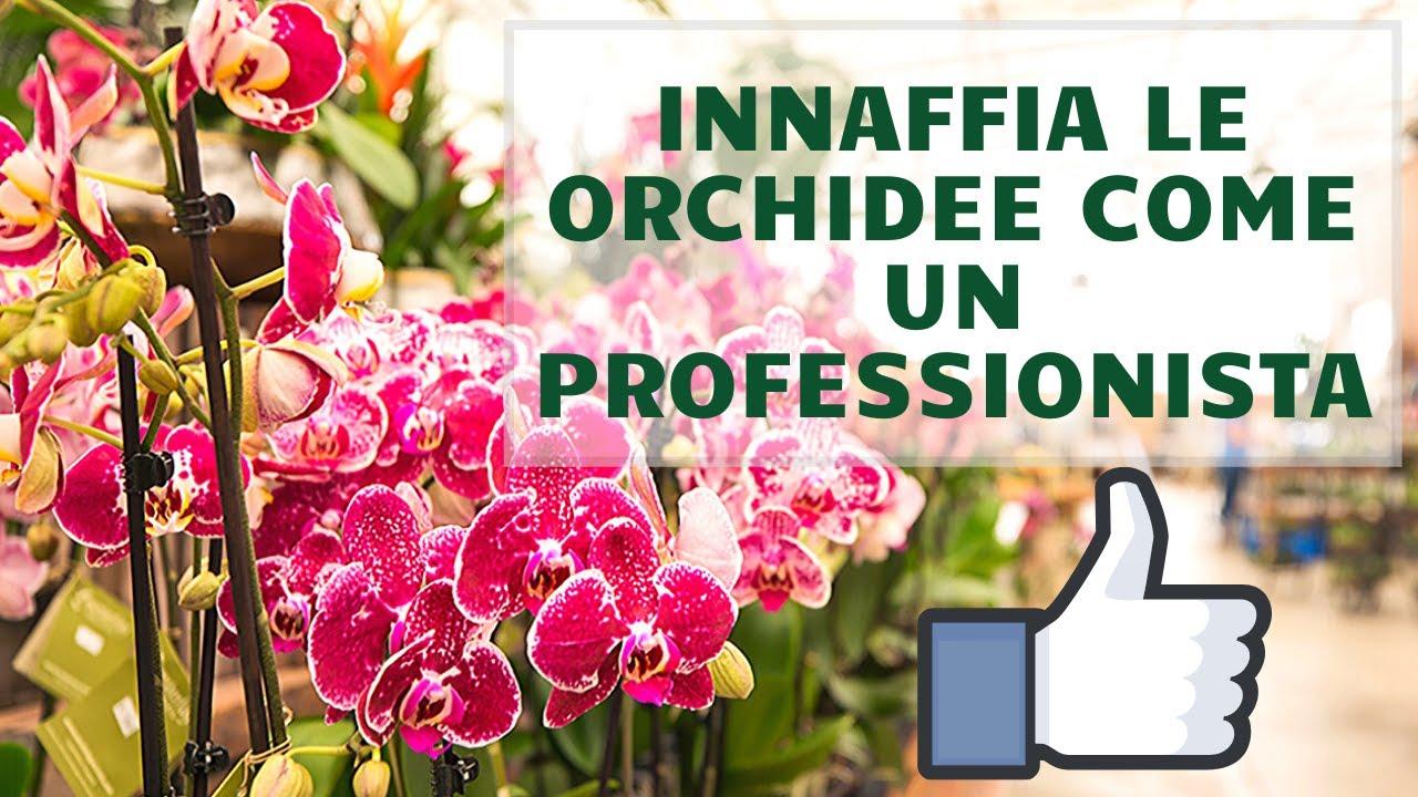 Download ANNAFFIA LE ORCHIDEE COME UN PROFESSIONISTA
