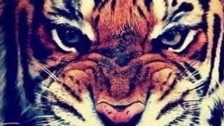Фотографии тигров