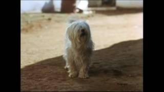 e'Lollipop (Full Afrikaans Movie - 1976)