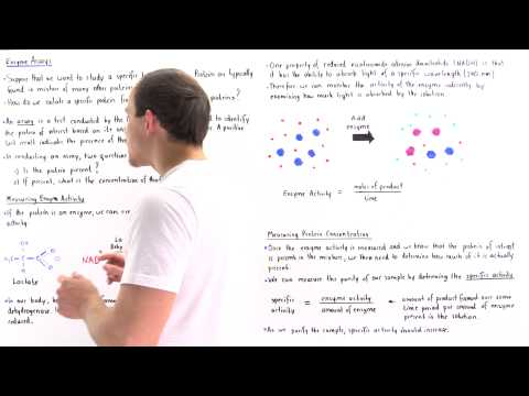 Enzyme Assay, Enzyme Activity and Specific Activity