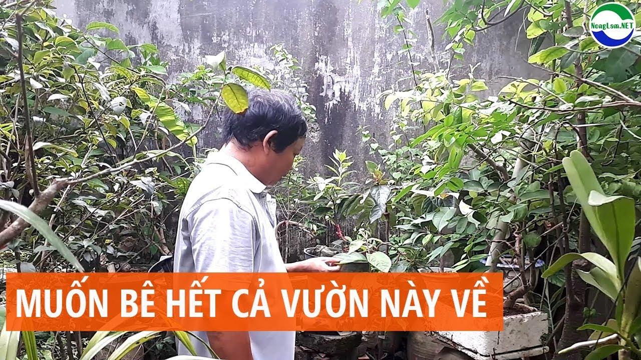 Vườn cây cảnh đẹp đa loại tại Thái Nguyên, cây nào cũng muốn mang về