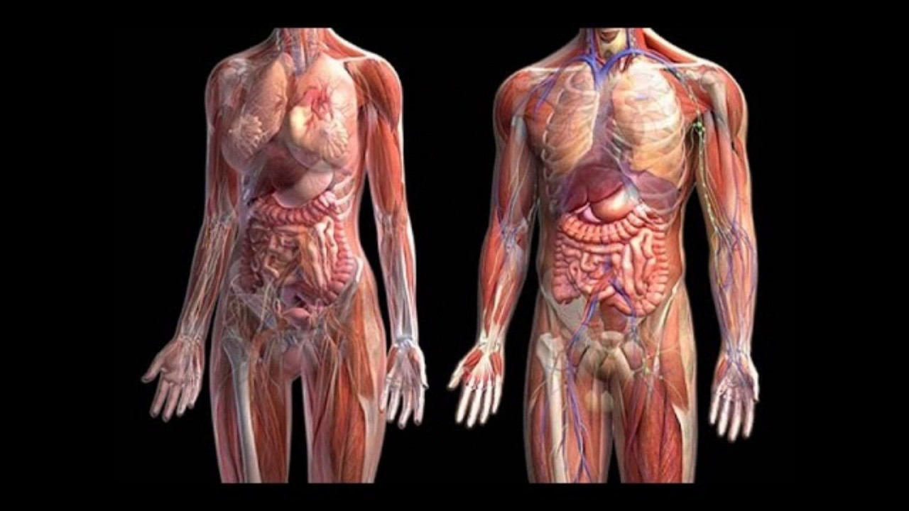 Biomecanica: Componentes del Sistema Muscular - YouTube