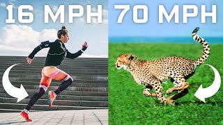 Why Humans Cant Run Cheetah Speeds (70mph) and How We Could | WIRED