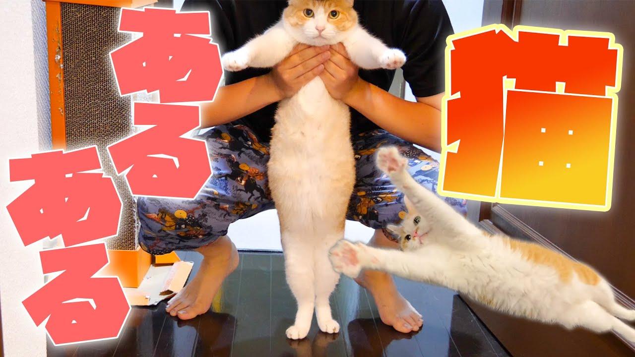 人間を魅了する猫たちの『猫あるある』紹介してみた!