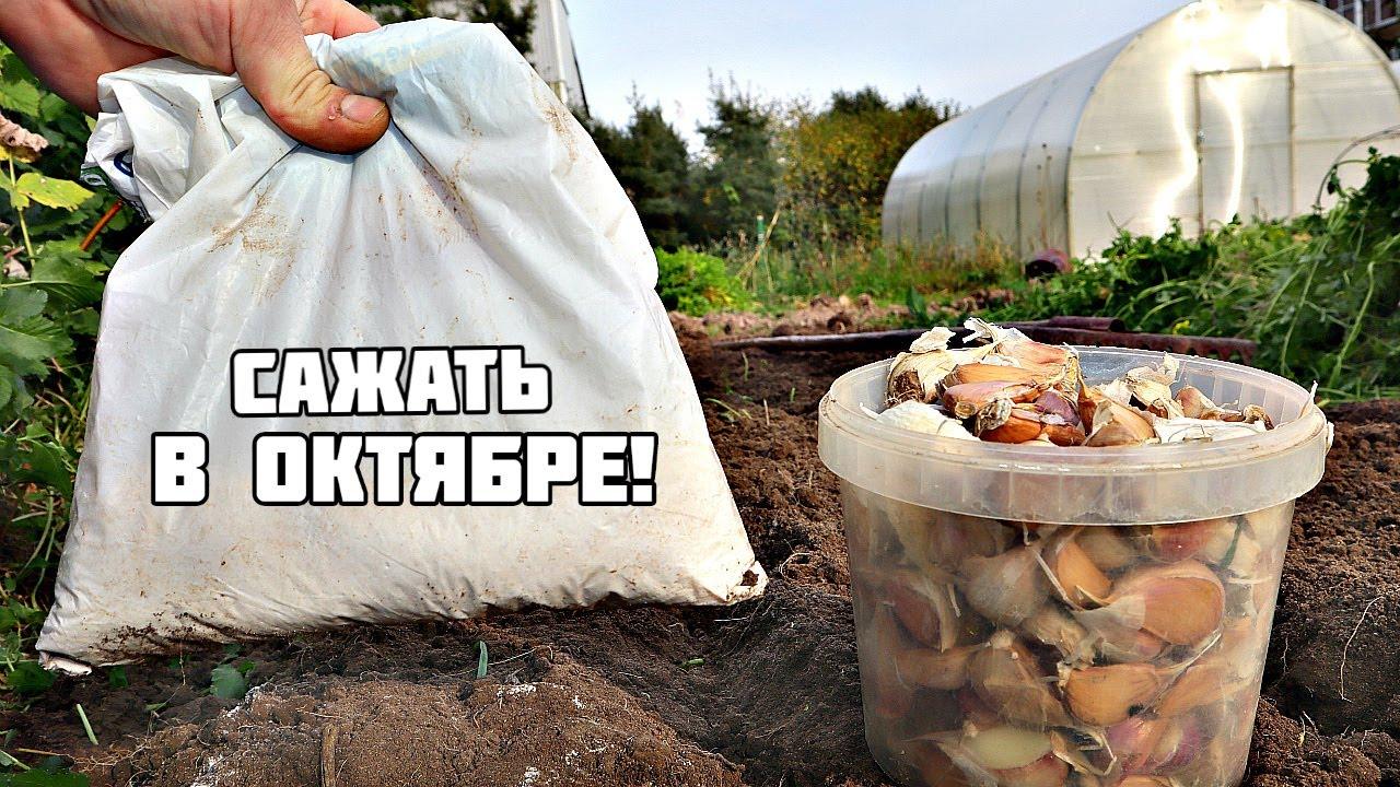 Посадите это в октябре на огороде и в саду в первую очередь! Что сажать в октябре на огороде?