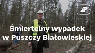 Śmiertelny wypadek w Puszczy Białowieskiej