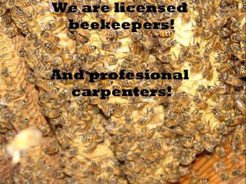 Seven Points, Texas  AA Bee Removal Experts, Seven Points, Texas