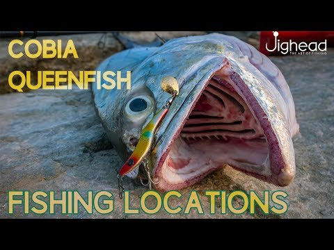 New Fishing Season - Locations, Cobia And Queen Fish
