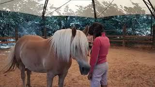 Extrait Stage Les chevaux aux sons des cinq Accords toltèques