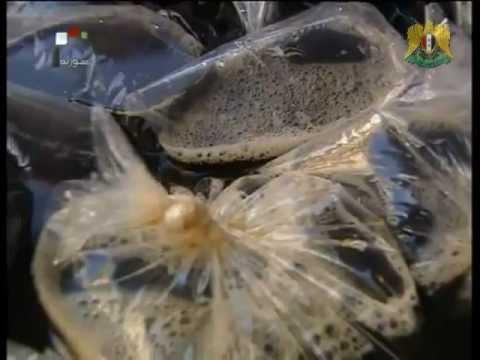 Syria News 30 July 2012. Najad: Iran stands by syria, Army liberate hostage, Saudi uprising