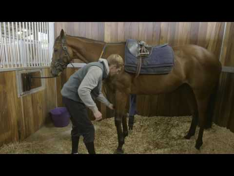 How To Tack Up A Racehorse  #HorseHowTo