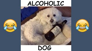 FUNNIEST Quincy The Dog Videos - Best Quincy and Patrick Barnes Vines and Instagram Videos