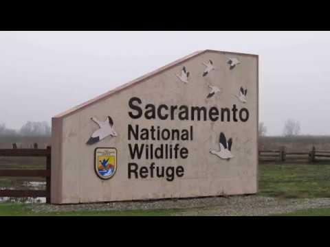 Sacramento Wildlife Refuge Hunting November 1st 2017